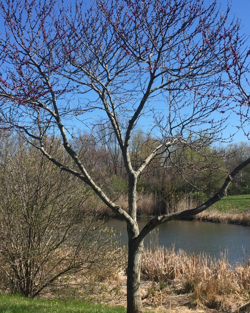 spirits pond tree 2