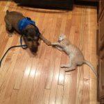 gracie the cat, tucker the dog
